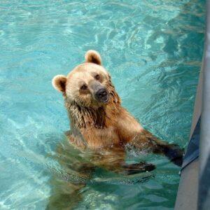 Out of Captivity - Bear Splash